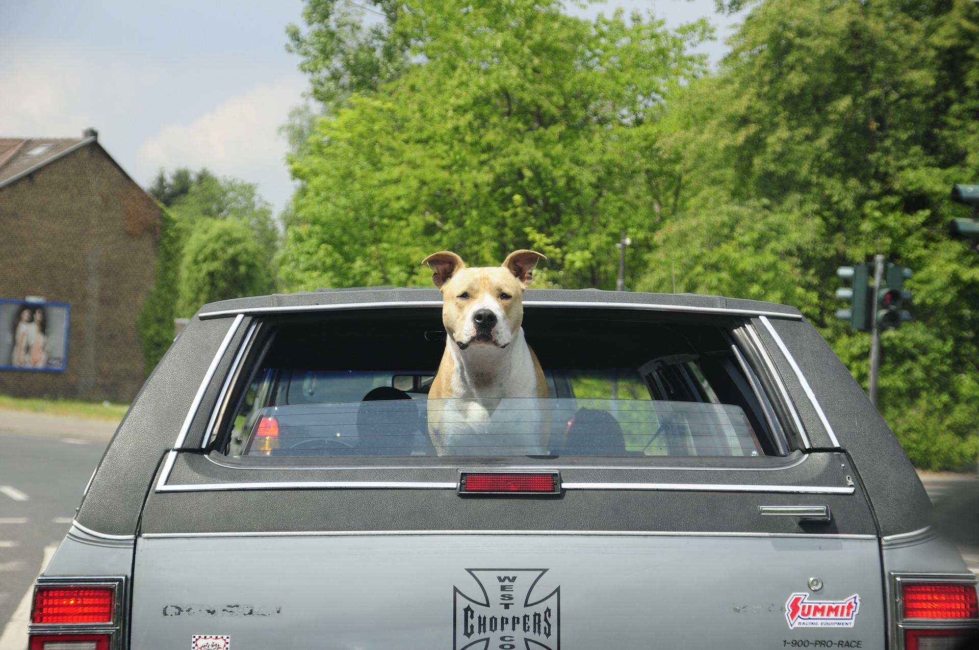 Dog-travel-car-trip